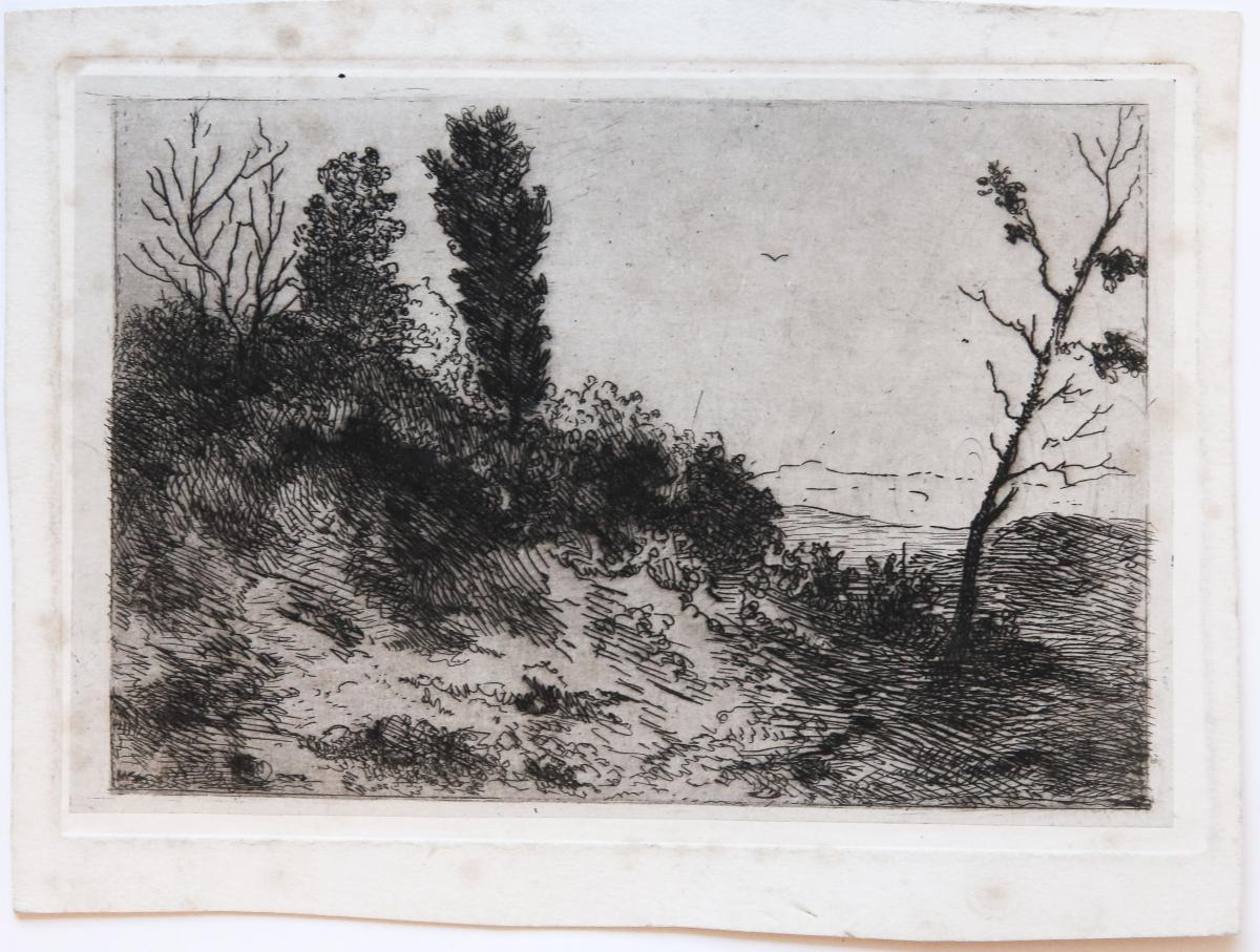 Three etchings of landscapes and plants (Landschap en planten).